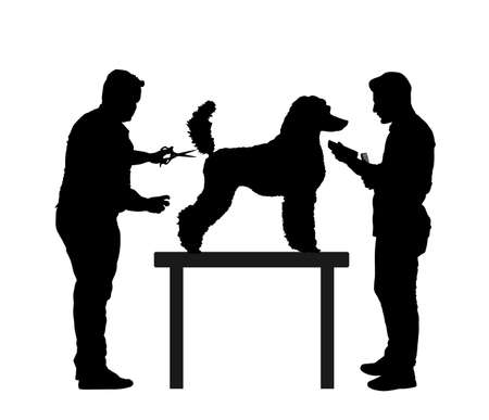 Professional grooming team hairdressing French Royal Poodle champion dog on desk in groom saloon vector silhouette illustration isolated on white background. Hygiene health care for pet. Фото со стока - 153644762