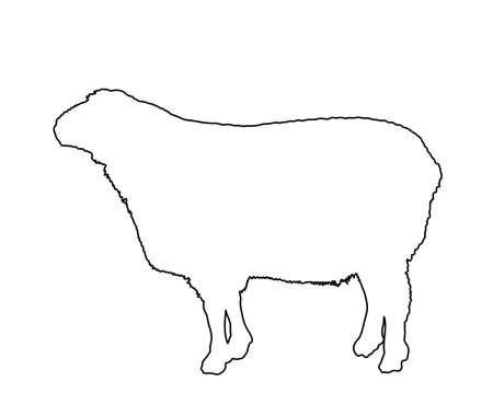 Sheep vector line contour silhouette illustration isolated on white. Lamb meat. Butcher shop template for craft food packaging or restaurant design. Domestic animal symbol.