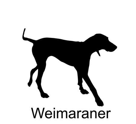 Hunting dog Weimaraner vector silhouette illustration isolated on white background. Bird hunter dog pointer. Фото со стока - 153644842
