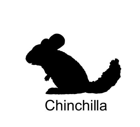Chinchilla vector silhouette illustration isolated on white background. Cute little pet, rodent animal. Иллюстрация