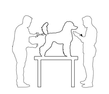 Professional grooming team hairdressing French Royal Poodle champion dog on desk in groom saloon vector line contour silhouette isolated on white background. Hygiene health care for pet.