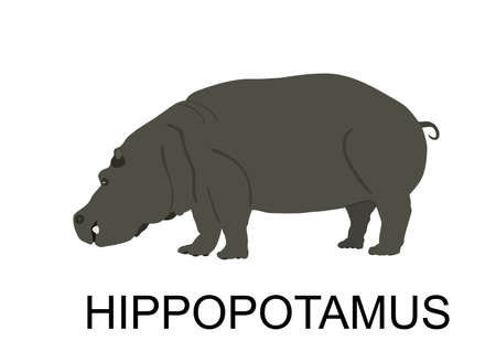 Hippopotamus, hippo vector illustration isolated on white background. Big animal from Africa.