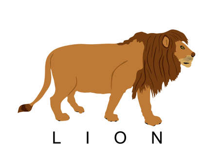 Lion vector illustration isolated on white background. Animal king. Big cat. Pride of Africa. Leo zodiac symbol. Wildlife predator. Иллюстрация
