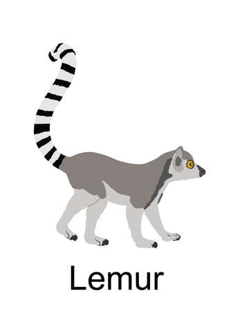 Lemur monkey vector illustration isolated on white background. Funny animal. Ring tail lemur symbol.