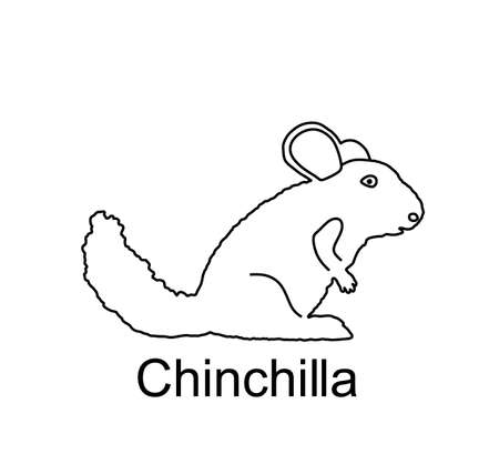 Chinchilla vector line contour illustration isolated on white background. Cute little pet, rodent animal.