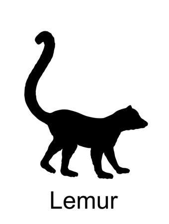 Lemur monkey vector silhouette illustration isolated on white background. Funny animal. Ring tail lemur symbol.