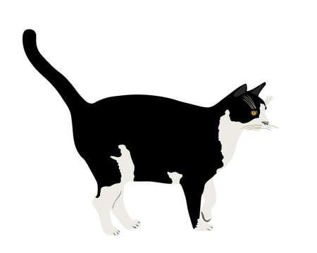Black and white cat vector illustration isolated on white background. Lovely pet. Иллюстрация