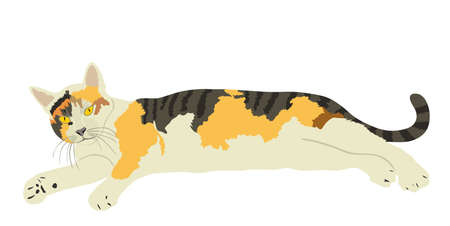 Cute calico cat lay on ground vector illustration isolated on white background. Lovely pet. Kitty lay down on floor.