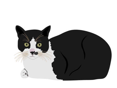 Black and white cute cat vector illustration isolated on white background. Lovely pet. Kitty lay down on floor.