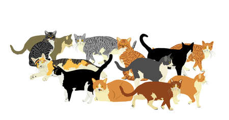 Group of many cats vector illustration isolated on white background. Cat family. Lovely friendly pets.