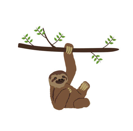Sloth hanging on three branch vector illustration isolated on white background. Funny lazy animal zoo attraction. Иллюстрация
