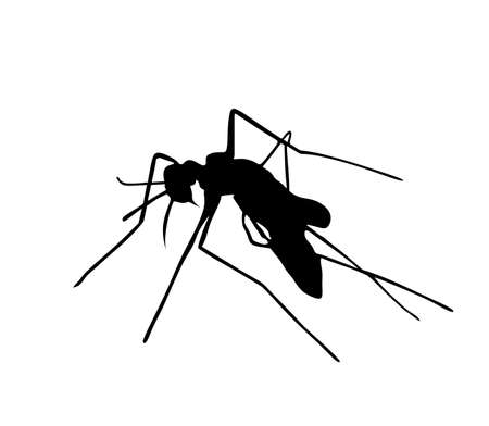 Mosquito vector silhouette illustration isolated on white background. Insect sucks blood. Animal symbol.