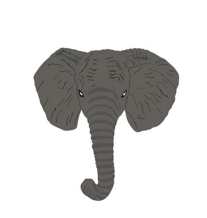 Elephant head vector illustration isolated on white background. Elephant male, African animal, safari attraction.