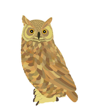 Owl vector illustration isolated on white background. Night bird hunter.