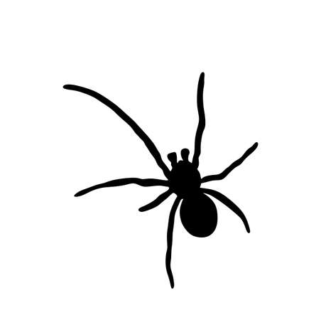 Spider vector silhouette illustration isolated on white background. Black widow tattoo sign.