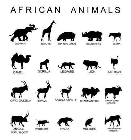 Group of African animals collection vector silhouette illustration isolated on white background. Big animals set poster. Elephant, giraffe, lion, hippo, hyena,rhino, zebra, camel, gorilla monkey... Фото со стока - 156276832