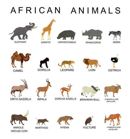 Group of African animals collection vector illustration isolated on white background. Big animals set poster. Elephant, giraffe, lion, hippo, hyena,rhino, zebra, camel, gorilla monkey, gazelle... Иллюстрация