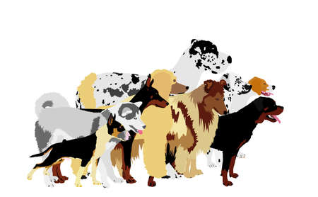 Many dogs in line waiting for veterinary clinic vector. Pack/array of dog illustration isolated on white. Dalmatian, Poodle, Rottweiler, Great Dane, Doberman, Rough Collie Scottish Shepherd