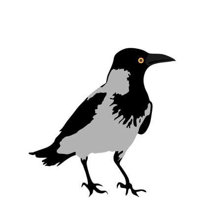 Crow vector illustration isolated on white background. Black bird raven symbol.