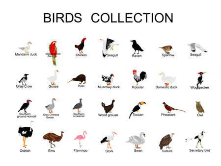 Large bird collection vector  illustration isolated on white background. Ornithology wallpaper. Birds set.