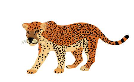 Jaguar vector illustration isolated on white background. Big cat, silent predator from America. Beautiful animal.