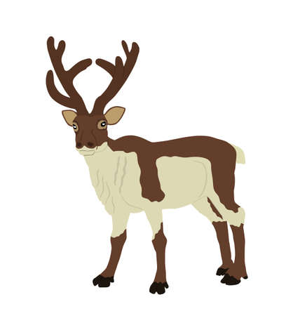 Reindeer vector illustration isolated on white background. Rein deer powerful animal. Christmas holiday symbol. Santa Claus best friend. 向量圖像