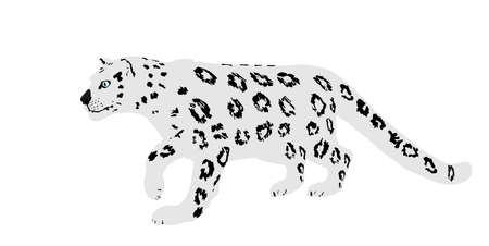 Snow leopard vector illustration isolated on white background. Wild cat in hunt lurking pray. Panther symbol.Silent predator.