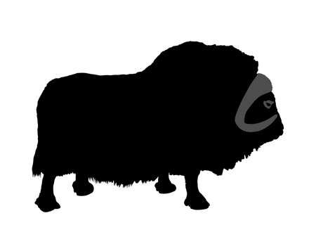 Muskox vector silhouette illustration isolated on white background. Musk ox beef. Powerful arctic animal symbol. 矢量图像