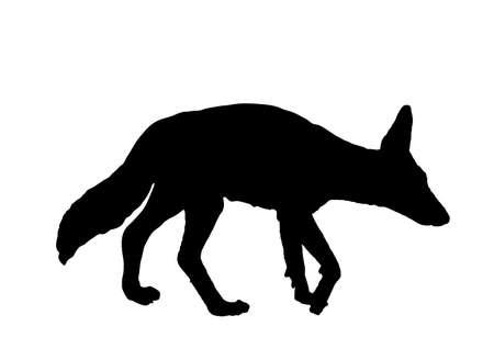 Black backed Jackal vector silhouette illustration isolated on white background.