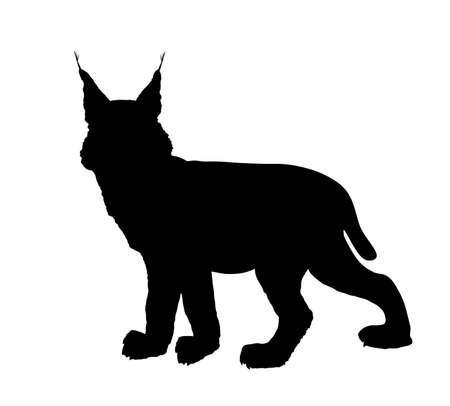 Lynx vector silhouette illustration isolated on white background. Bobcat silhouette. Wild cat symbol.