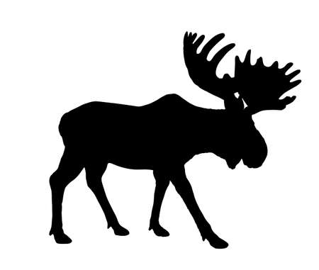 Moose vector silhouette illustration isolated on white background. Elk silhouette. Powerful deer with huge antlers symbol.