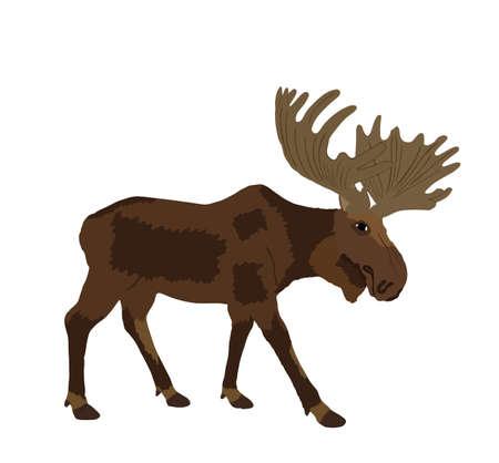 Moose vector illustration isolated on white background. Elk buck. Powerful deer with huge antlers symbol.