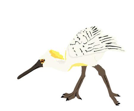 Heron spoon bill vector illustration isolated on white background. Heron silhouette. Big bird fishing symbol.