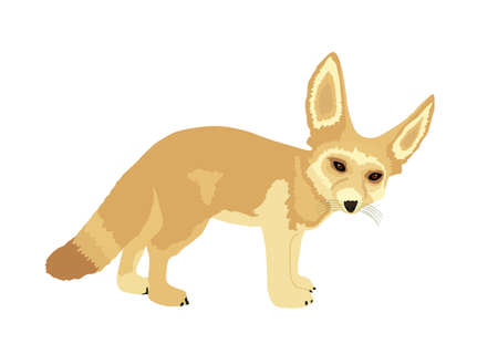 Fennec fox vector illustration isolated on white background. Desert fox symbol. Vulpes zerda.