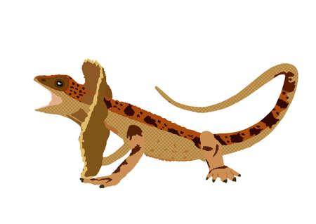 Frilled lizard vector illustration isolated on white background. Chlamydosaurus kingii symbol. Frill Dragon Neck.