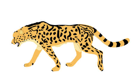 King cheetah vector illustration isolated on white background. Acinonyx jubatus symbol. Big cat, fastest animal on planet. Elegant African safari animal.