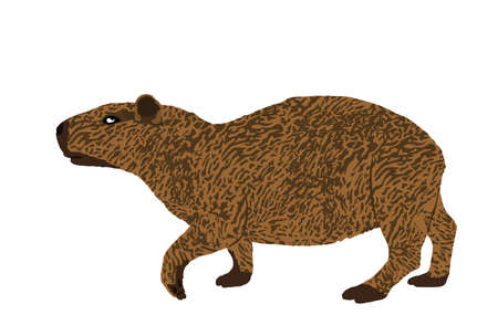 Capybara vector illustration isolated on white background. The biggest rodent animal symbol. Hydrochaeris hydrochaeris.