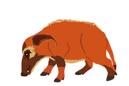 Red river hog vector illustration isolated on white background. Bush pig symbol. Potamochoerus porcus.