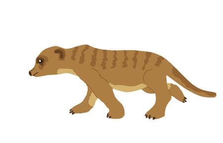 Meerkat vector illustration isolated on white background. 免版税图像 - 157725950