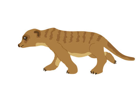 Meerkat vector illustration isolated on white background.