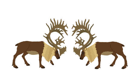 Deer battle vector illustration isolated on white background. Reindeer powerful buck with huge antlers. Rein deer fighting for female. Struggle in forest. Zoo animal nature. Christmas holiday symbol. 일러스트
