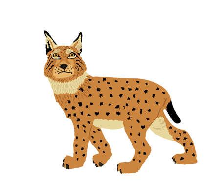 Lynx vector illustration isolated on white background. Bobcat silhouette. Wild cat symbol.