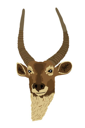 Waterbuck head portrait vector illustration isolated on white background. African deer. Safari hunting trophy.