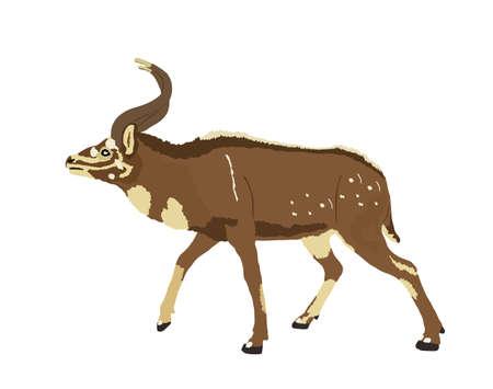 Mountain Nyala vector illustration isolated on white background. Tragelaphus buxtoni. Safari animal. Beautiful deer antelope.