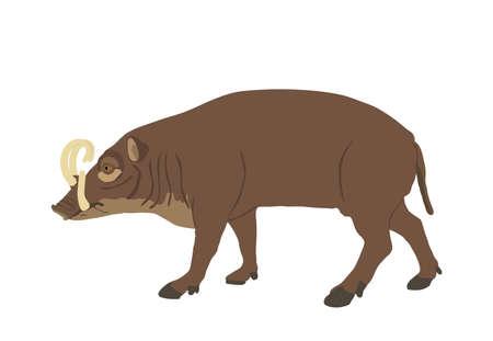 Babirusa vector illustration isolated on white background. Deer pig animal. Babyrussa pig deer.