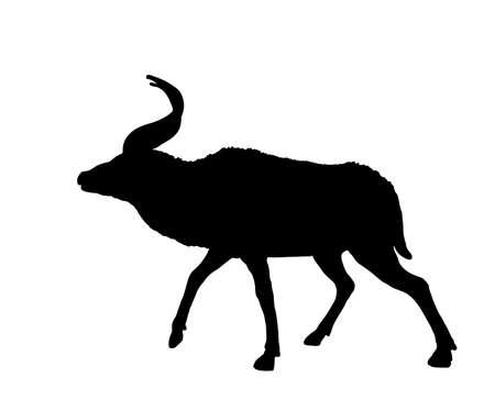 Mountain Nyala vector silhouette illustration isolated on white background. Tragelaphus buxtoni. Safari animal. Beautiful deer antelope.