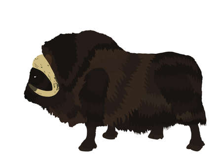 Muskox vector illustration isolated on white background. Musk ox beef. Powerful arctic animal symbol. Vectores