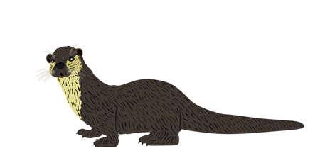 Otter vector illustration isolated on white background. River animal symbol.