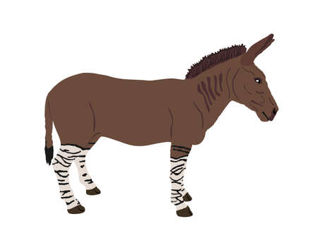 Zonkey vector illustration isolated on white background. Zebra  Donkey symbol. Zorse or zebrula or zonkie. Иллюстрация