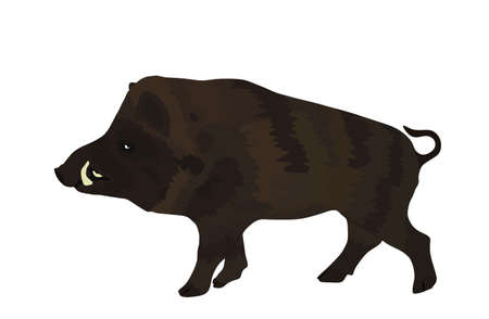 Warthog vector illustration isolated on white background. Bush Pig. Wild boar symbol. Boar isolated, warthog icon. Wild animals nature wildlife. Pumba hog.